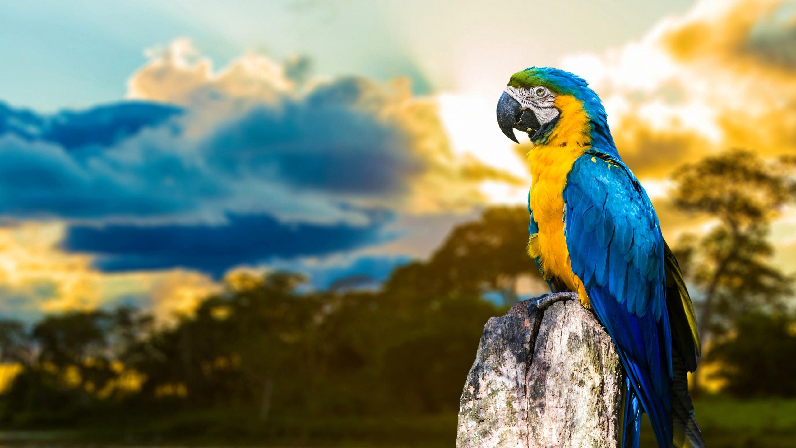 природа животные птицы попугаи  № 103590 загрузить