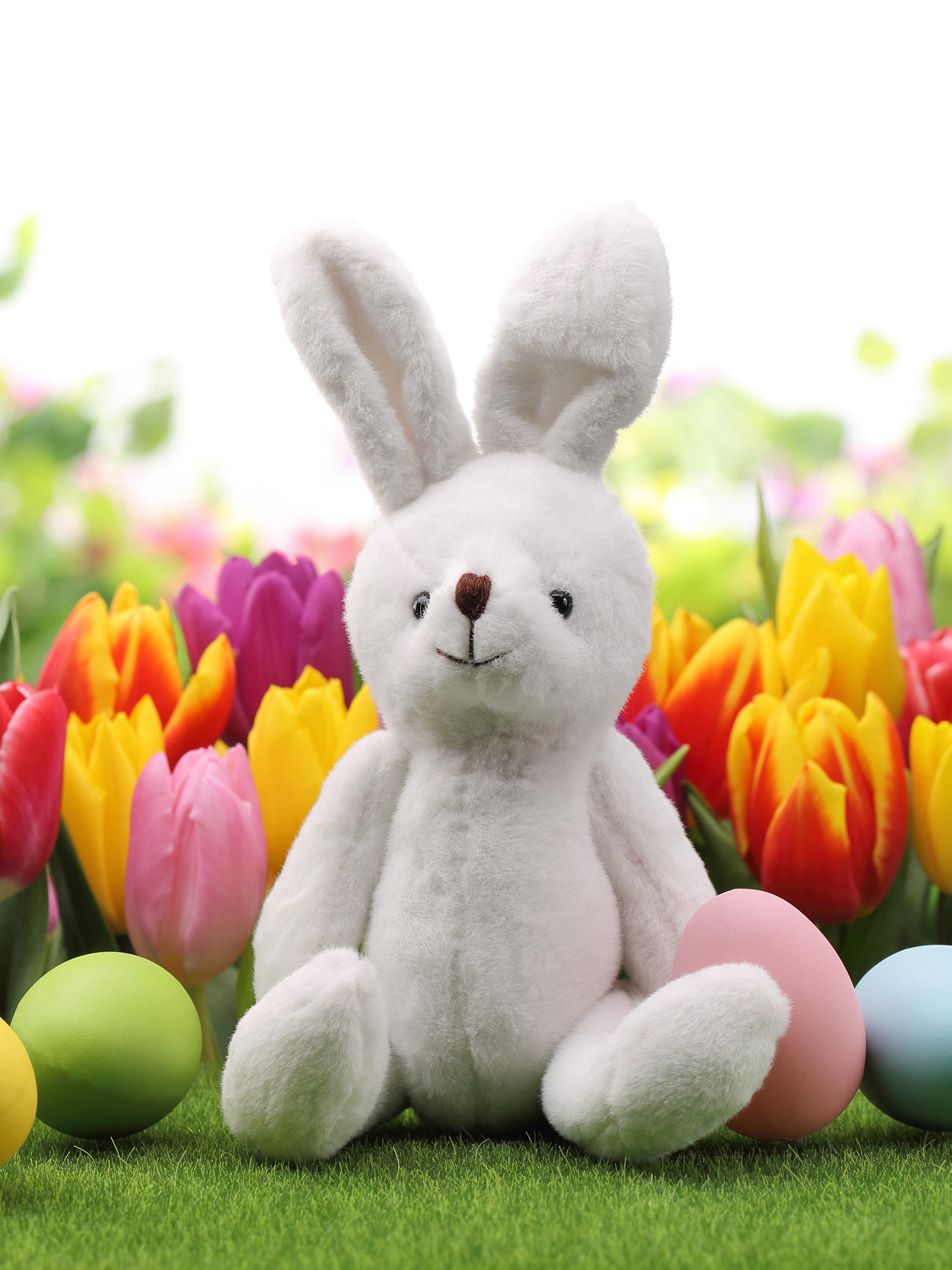 природа кролик цветы тюльпаны яйца пасха  № 271754 без смс