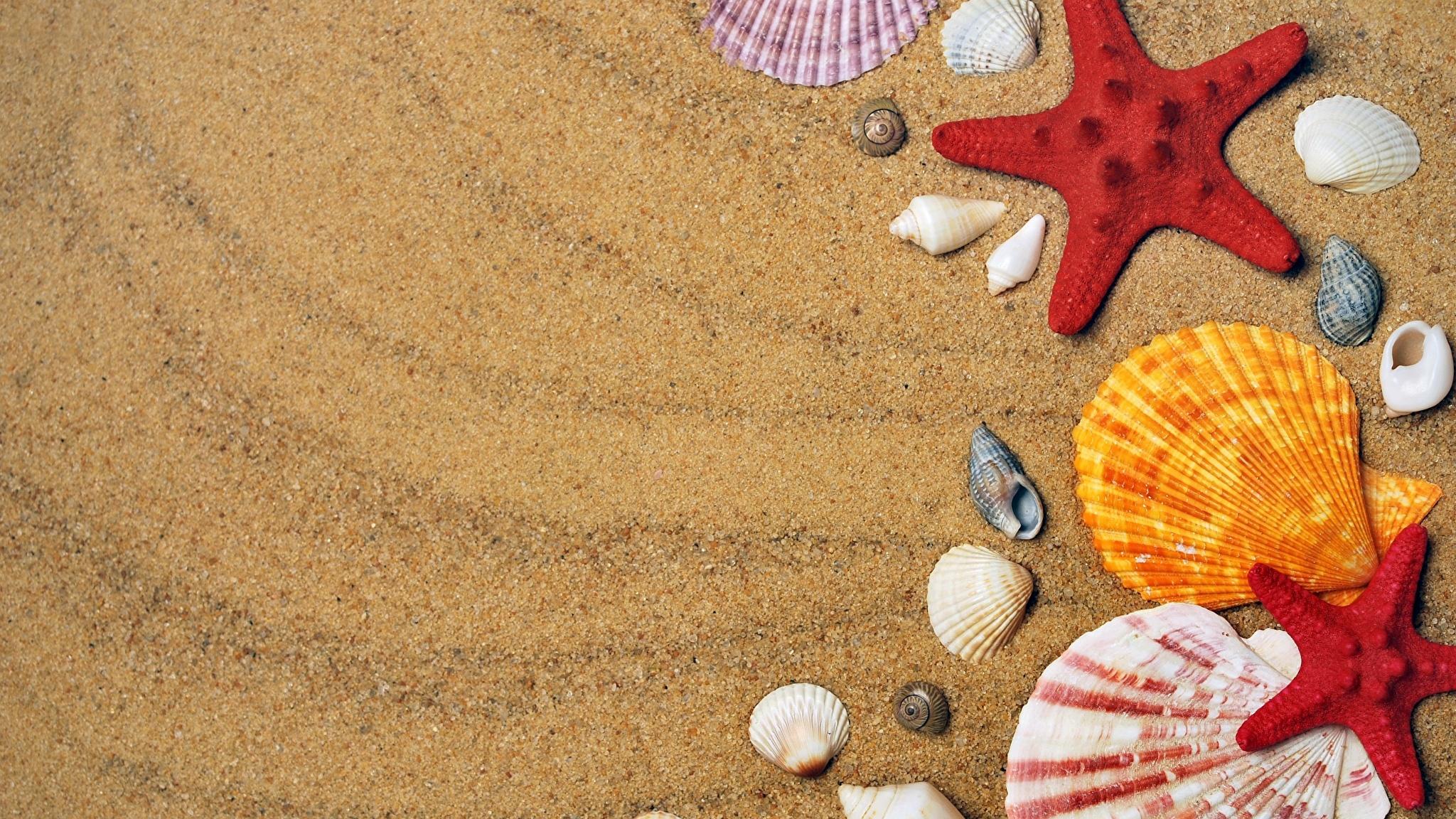 природа ракушка песок nature shell sand  № 1246791  скачать