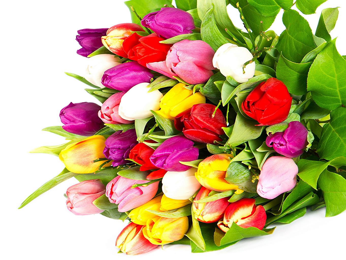 Цветы тюльпаны фото букеты 6