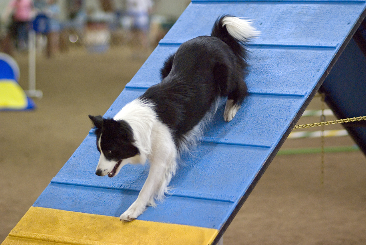 In The Zone Agility  trry