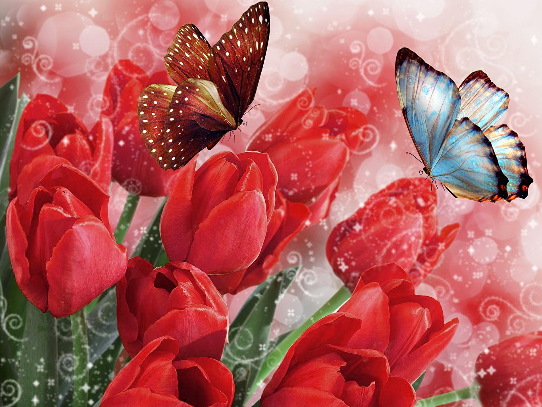 Анимированные открытки с бабочками