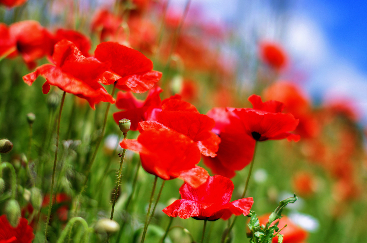 Фото цветы катерине