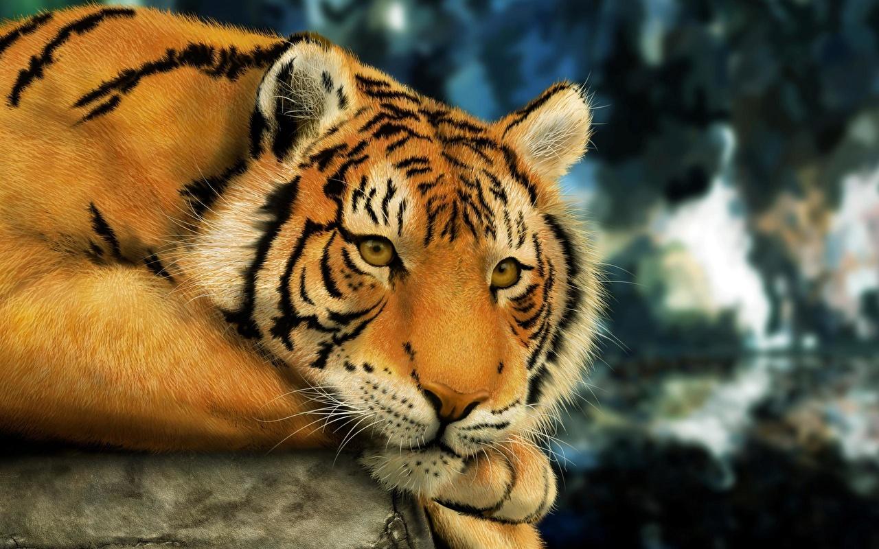 Fotos de portada tigres 50