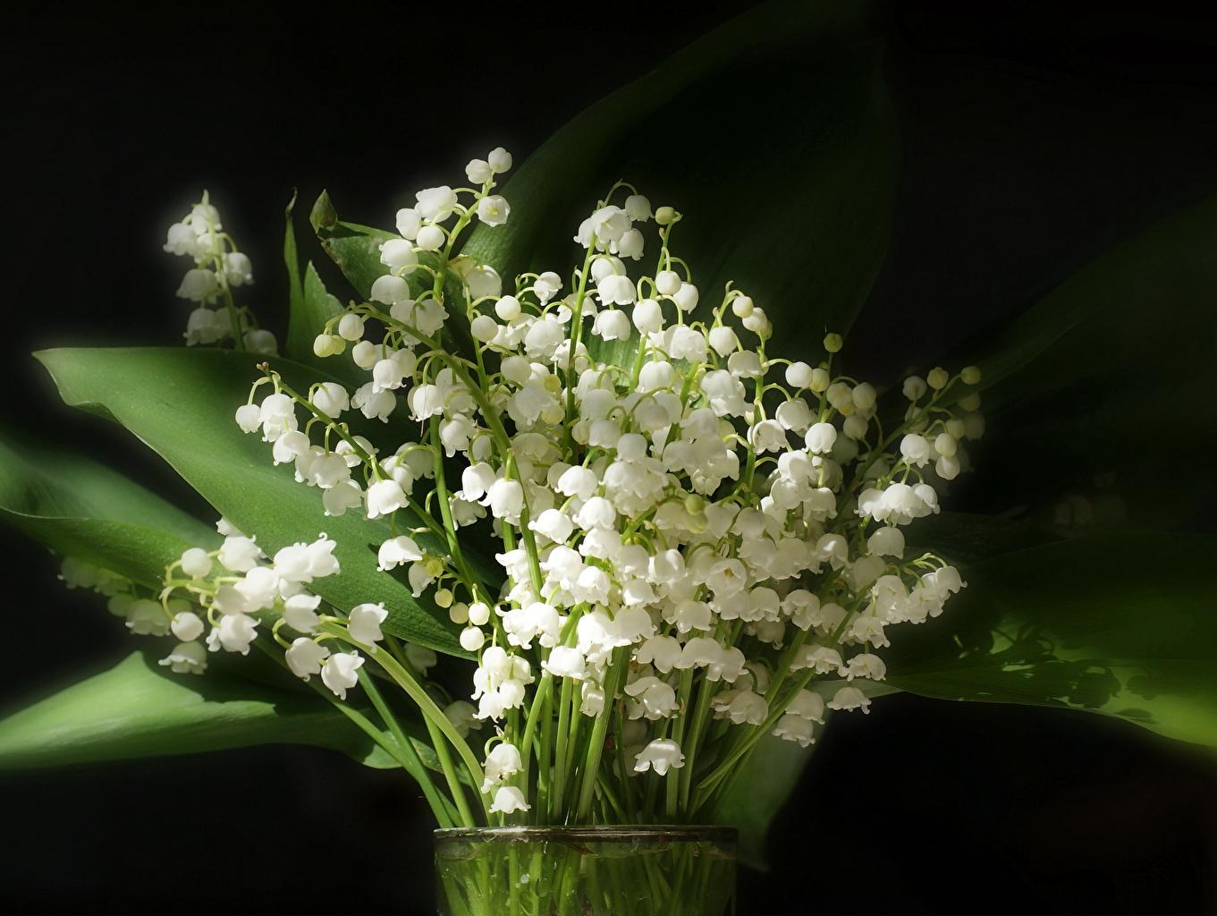 Цветы белые ландыши  № 1608689 загрузить