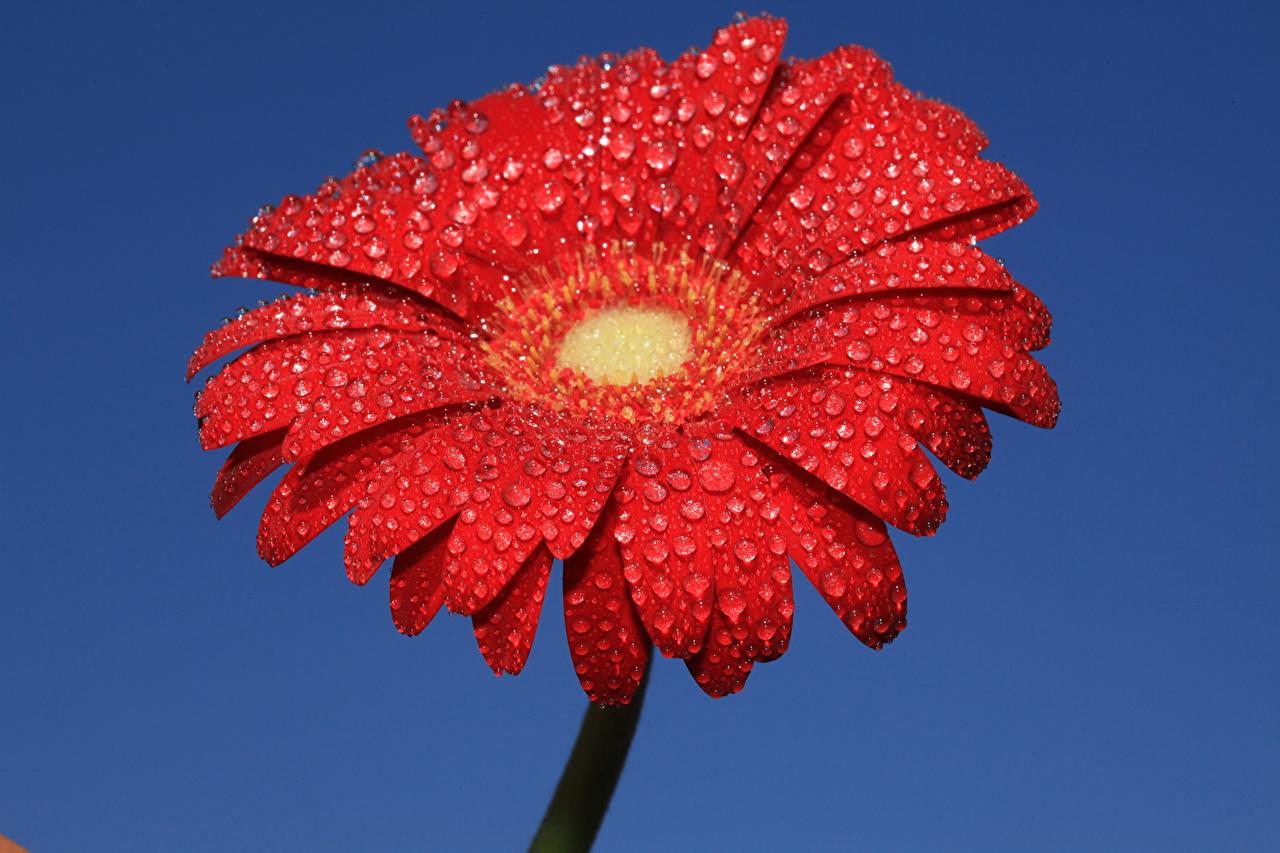 Цветы красный