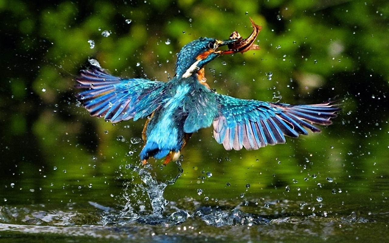 Beautiful flying bird images