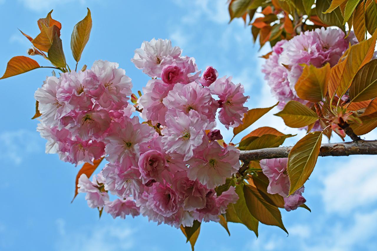 Дерево с крупными цветами