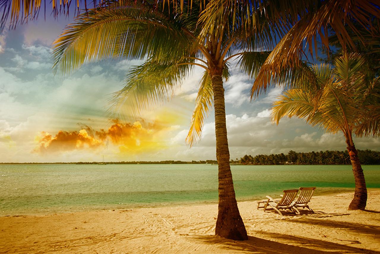 пальма закат фото