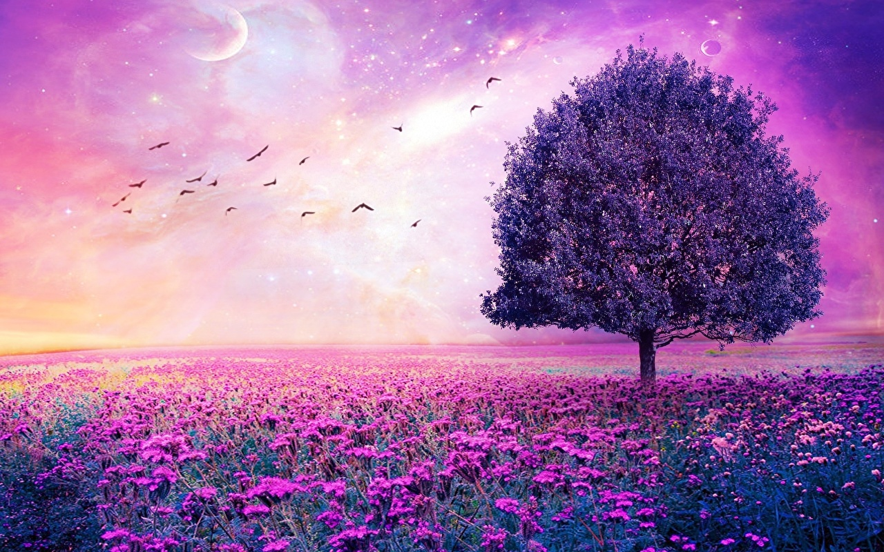 Purple color flower wallpaper hd