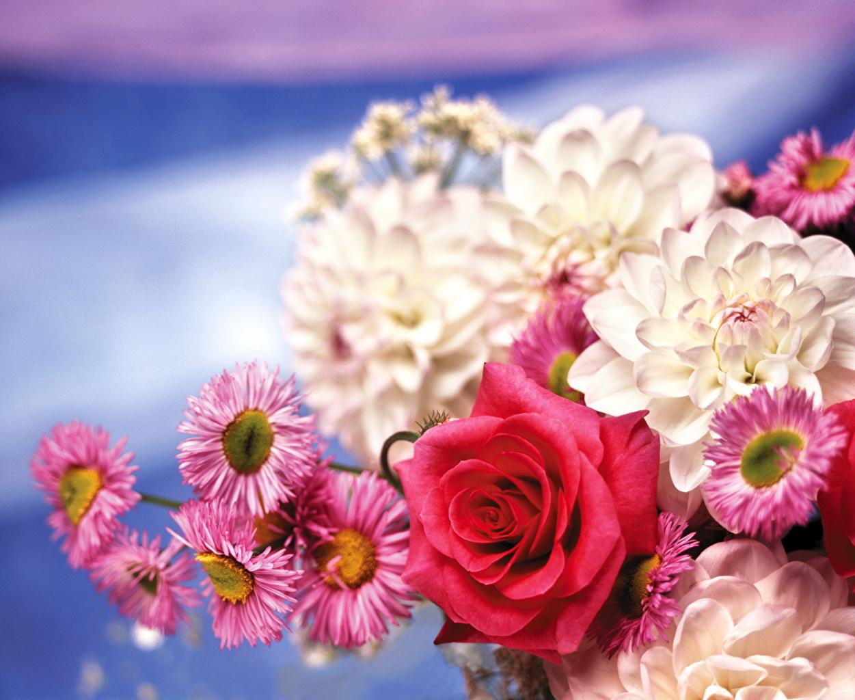 Цветы флористика