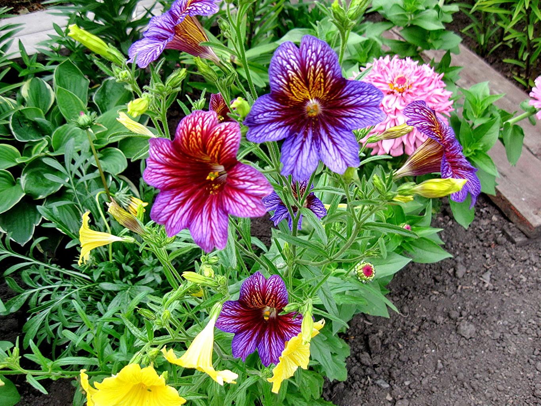 Фото и описание цветов для открытого грунта