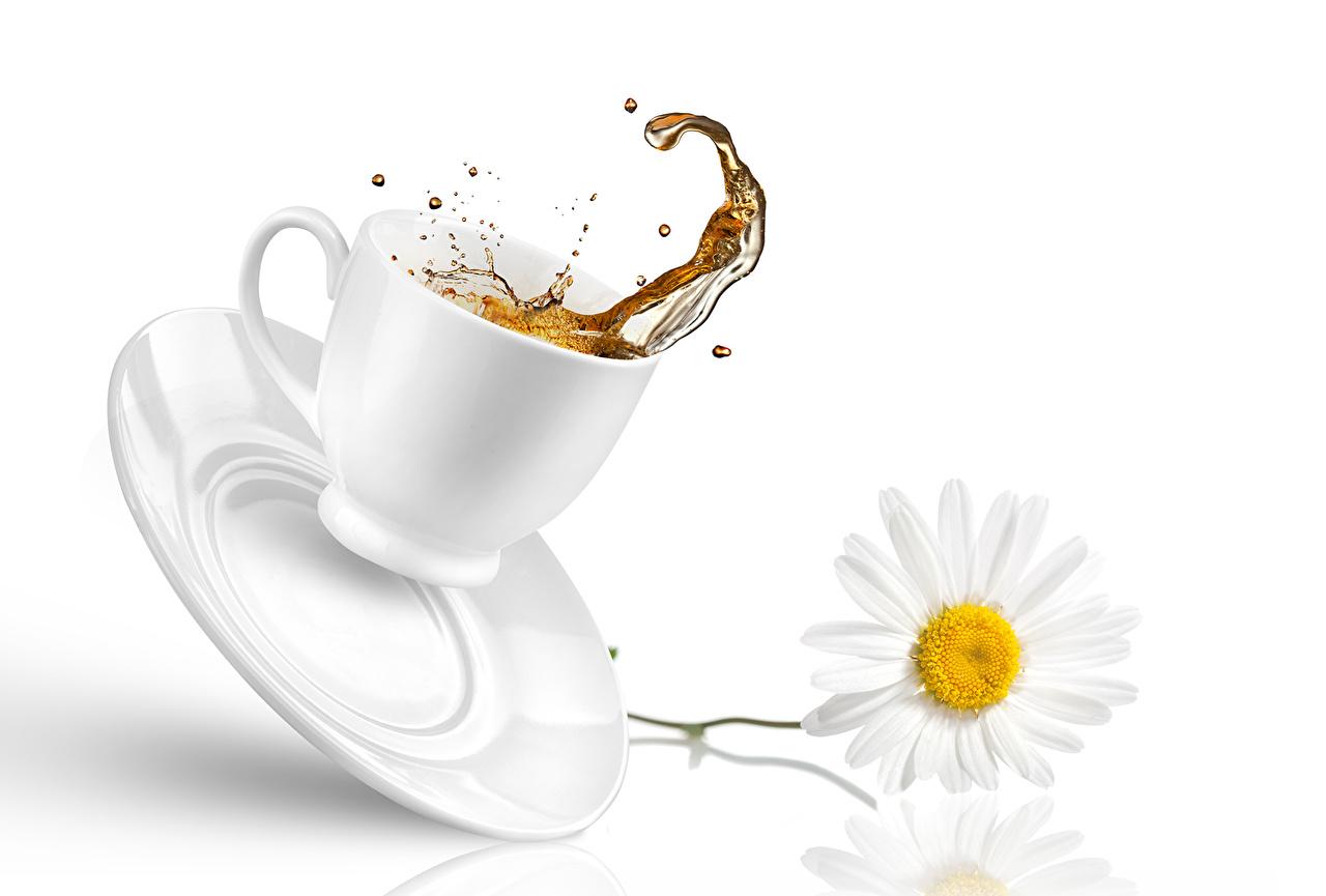 Напитки Чай Ромашки Чашка Блюдце Еда