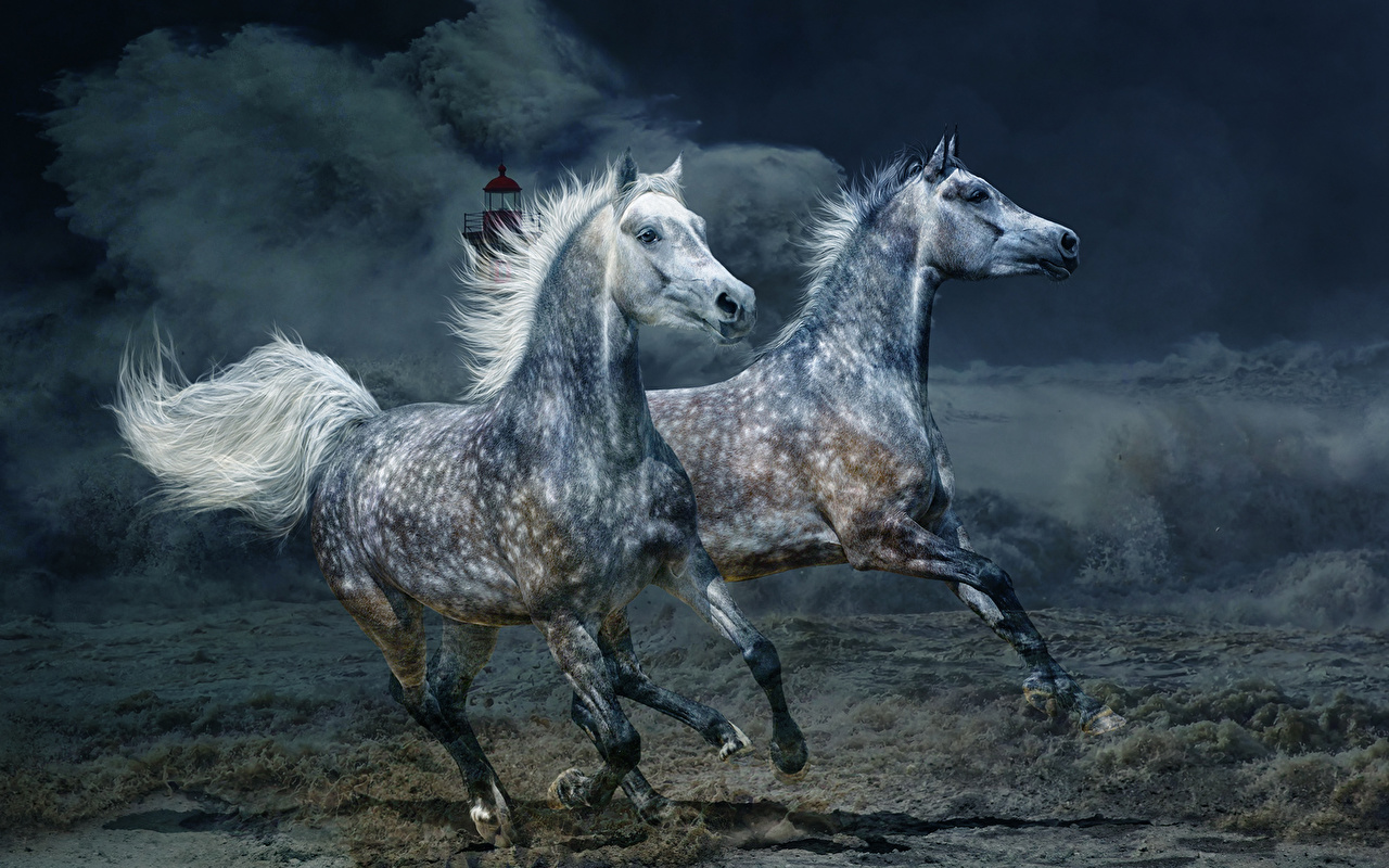 http://s1.1zoom.ru/big0/654/Horses_Two_Run_488906.jpg