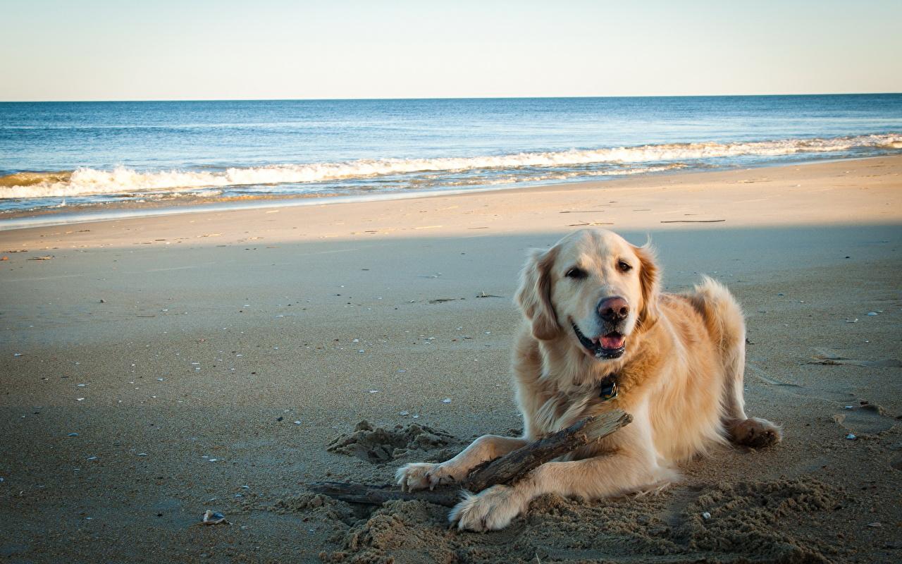 собака песок вода животное природа  № 956851 без смс
