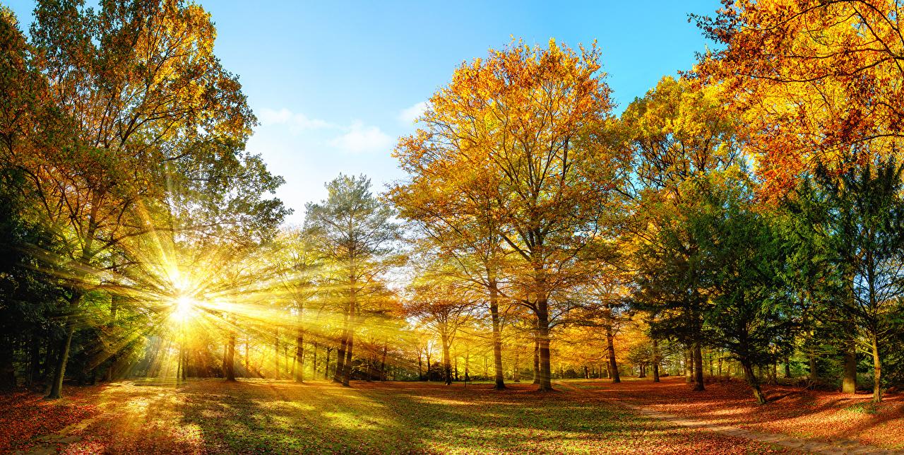 Времена года Осень Деревья Лучи света Природа