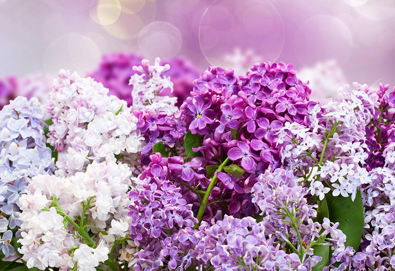 http://s1.1zoom.ru/big0/713/374061-svetik.jpg