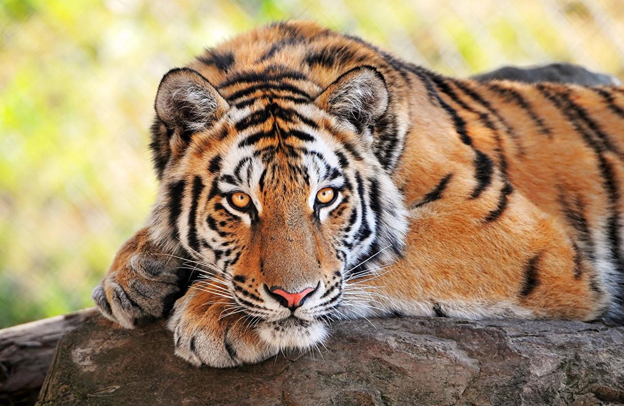 Espectaculares fotos de animales 56