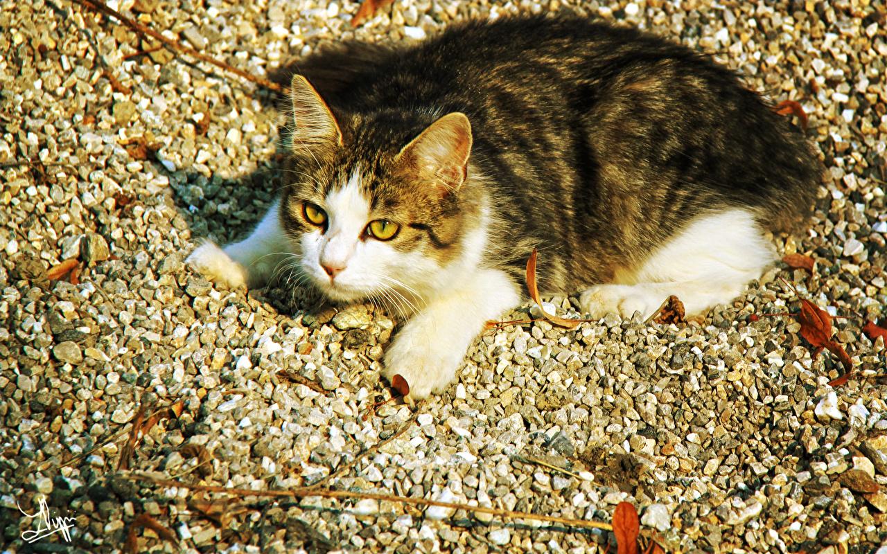 Кот на камушках  № 530448 бесплатно