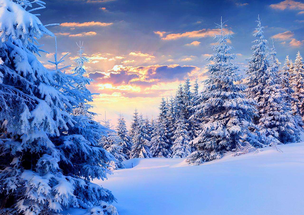 Времена года Зима Небо Ель Снег Природа