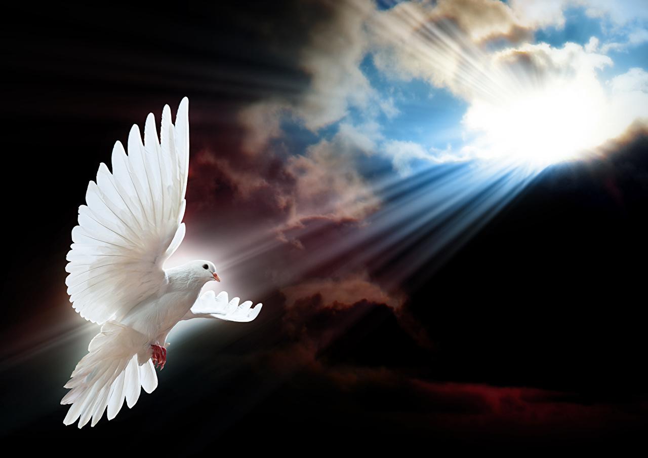 Птицы Голуби Небо Полет Белый Лучи света Облака Животные