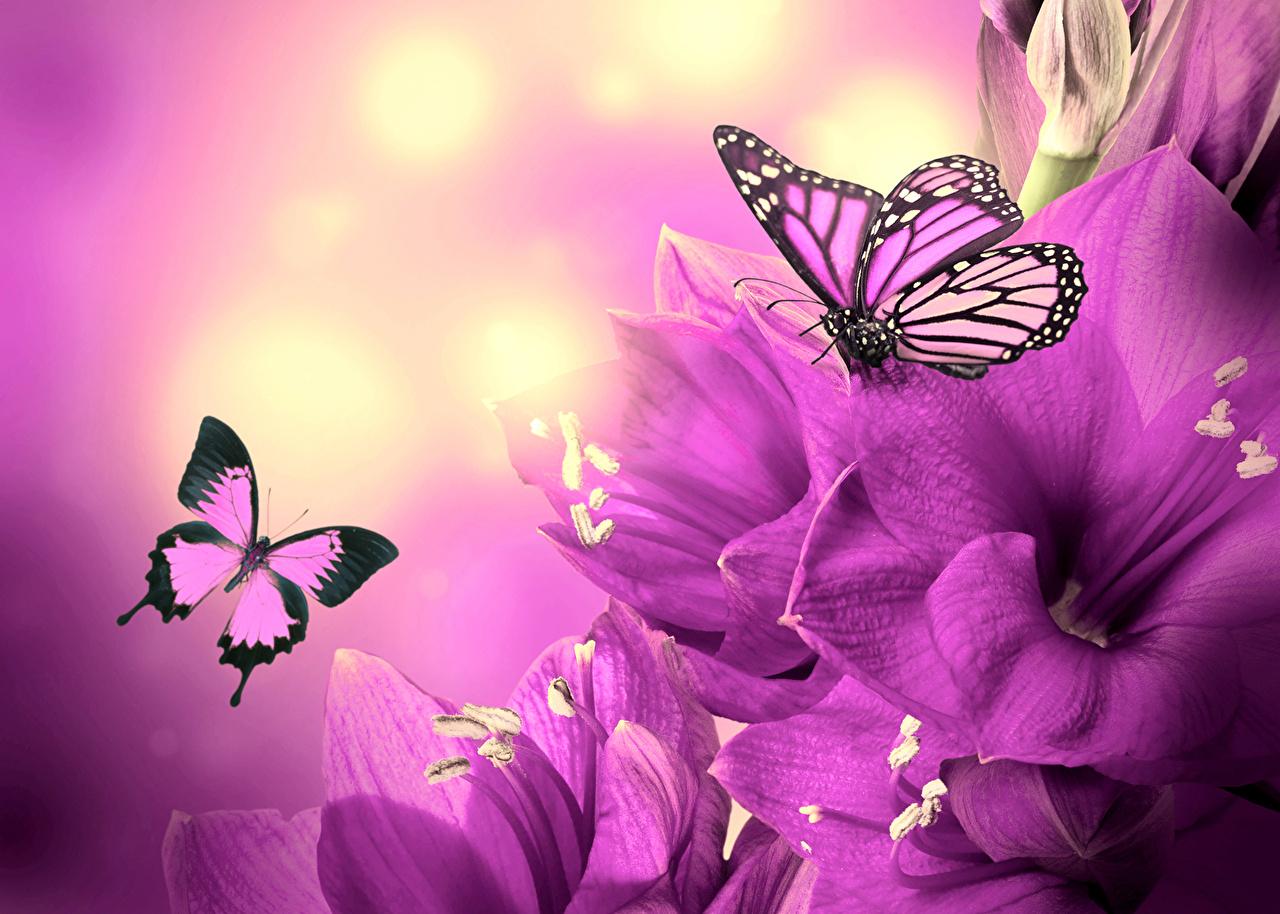 Фиолетовые цветы хорошего качества