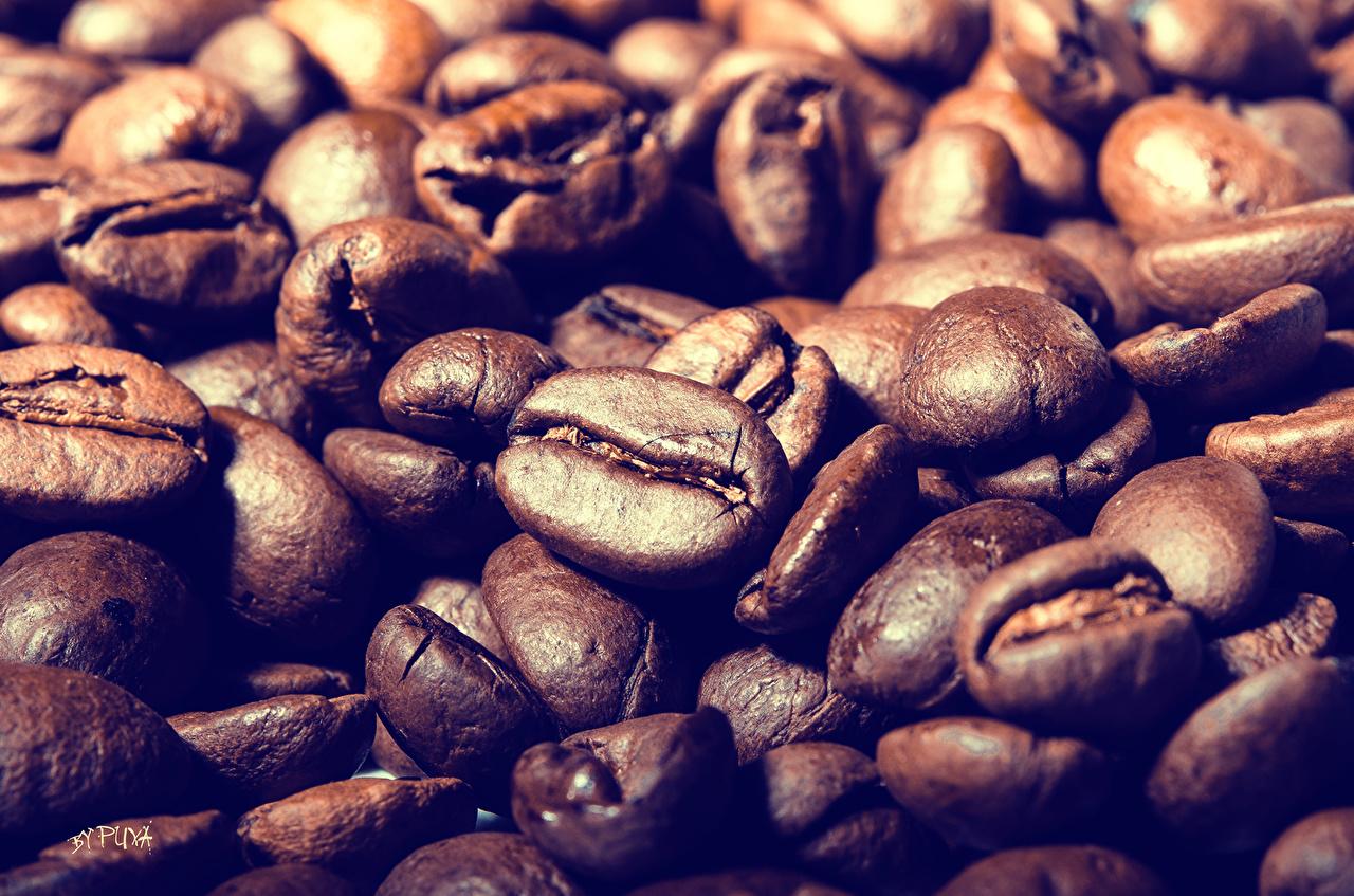 Напитки Кофе Крупным планом Зерна Еда