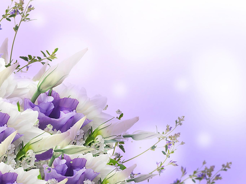 обои для рабочего стола цветы эустома № 631829  скачать