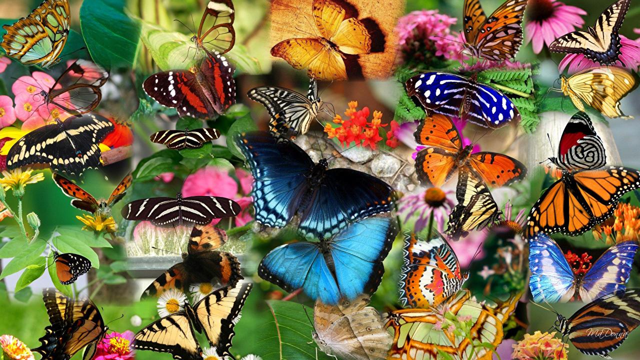 Фото много бабочек на цветах