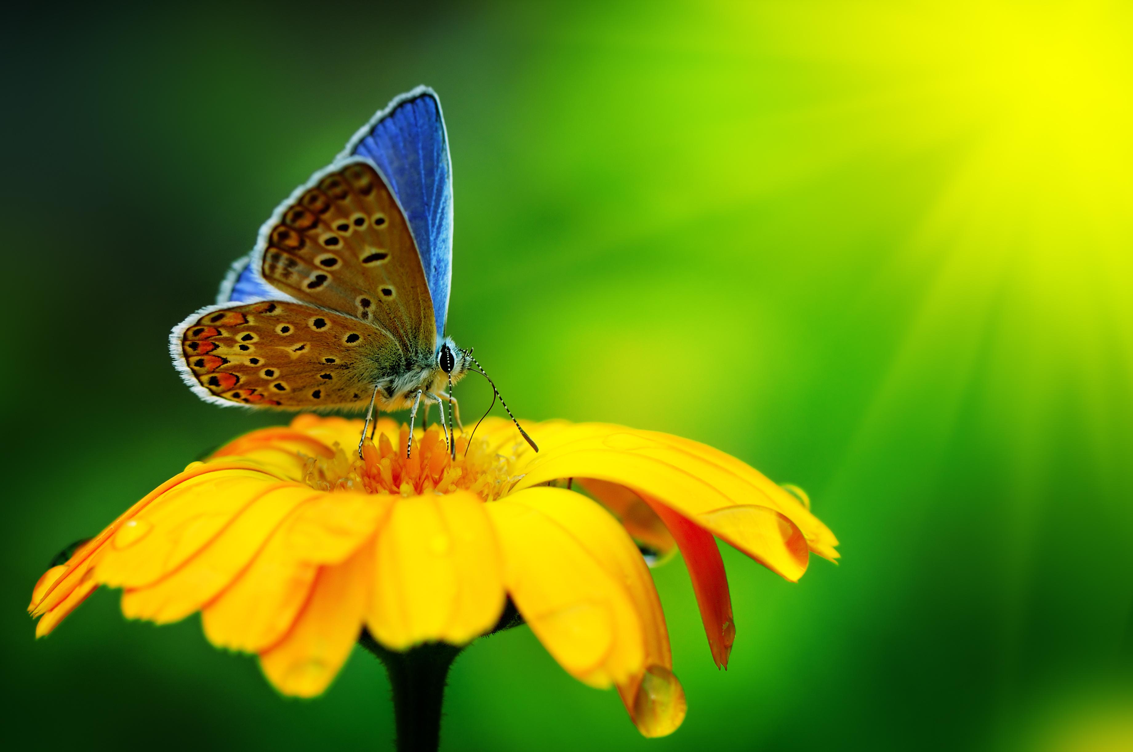 бабочка на зеленой траве  № 1396156 загрузить