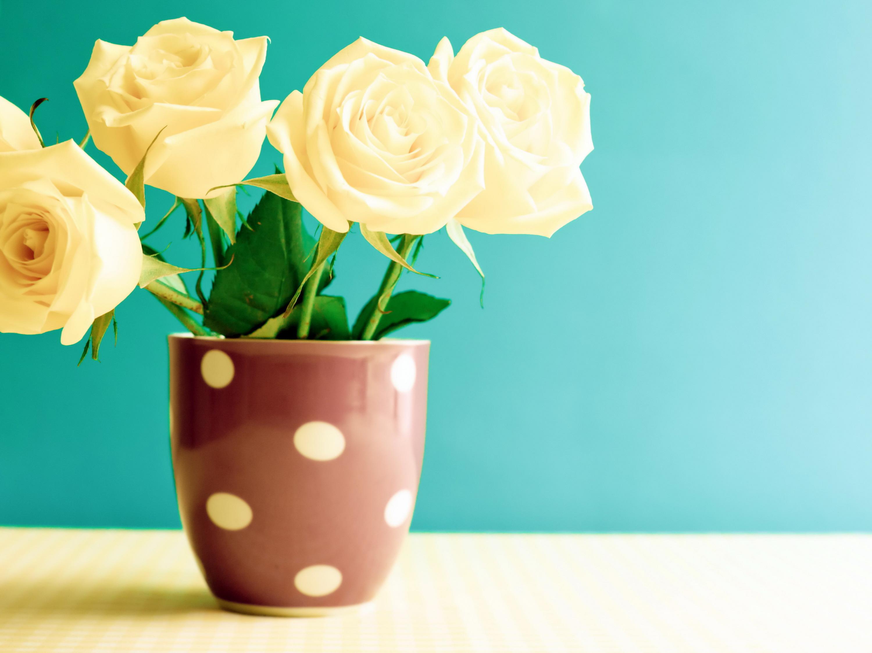 розы цветы ваза  № 1332644 без смс