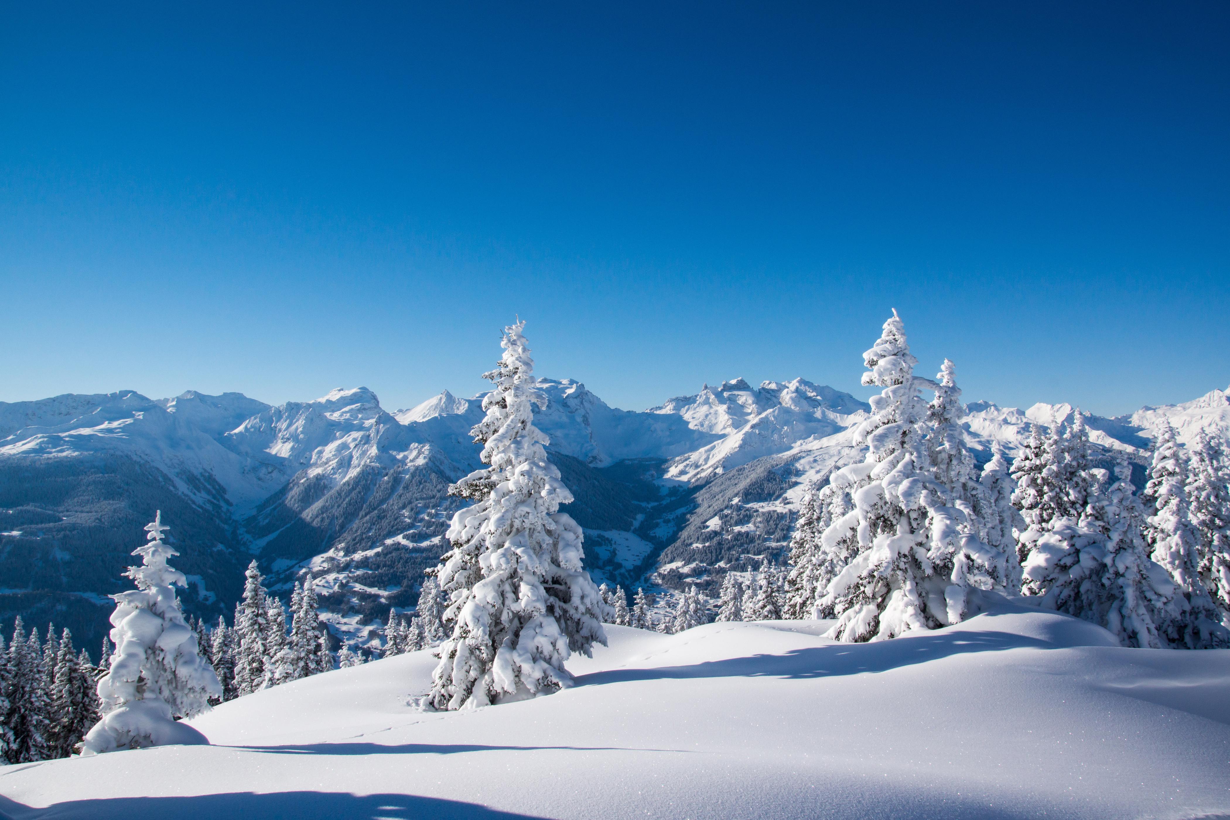заснеженные деревья в горах  № 355814 бесплатно