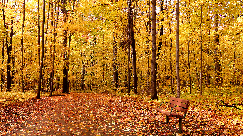 дерево листья парк  № 438582 без смс