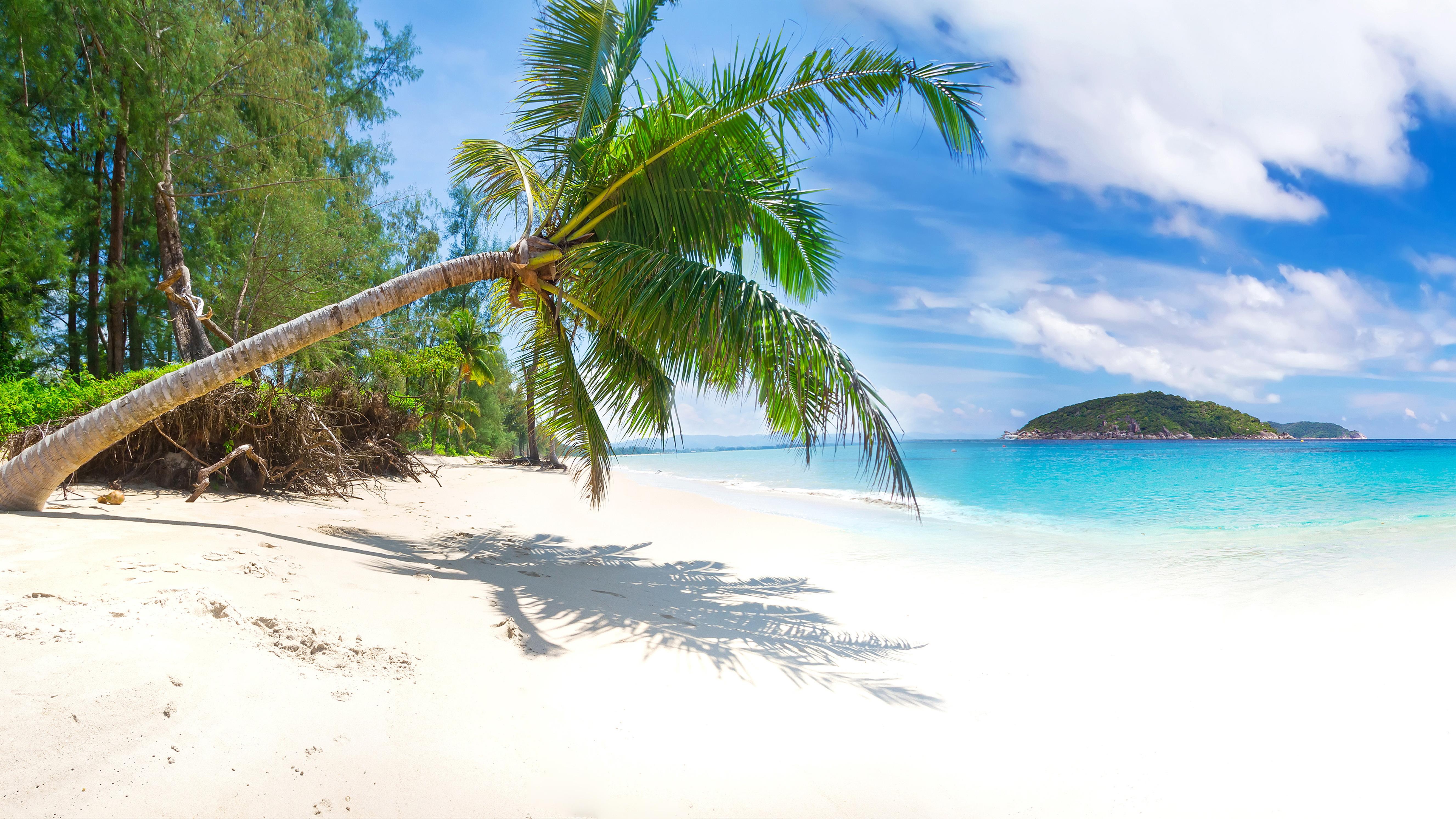 природа песок пляж дома море пальмы  № 3778413  скачать