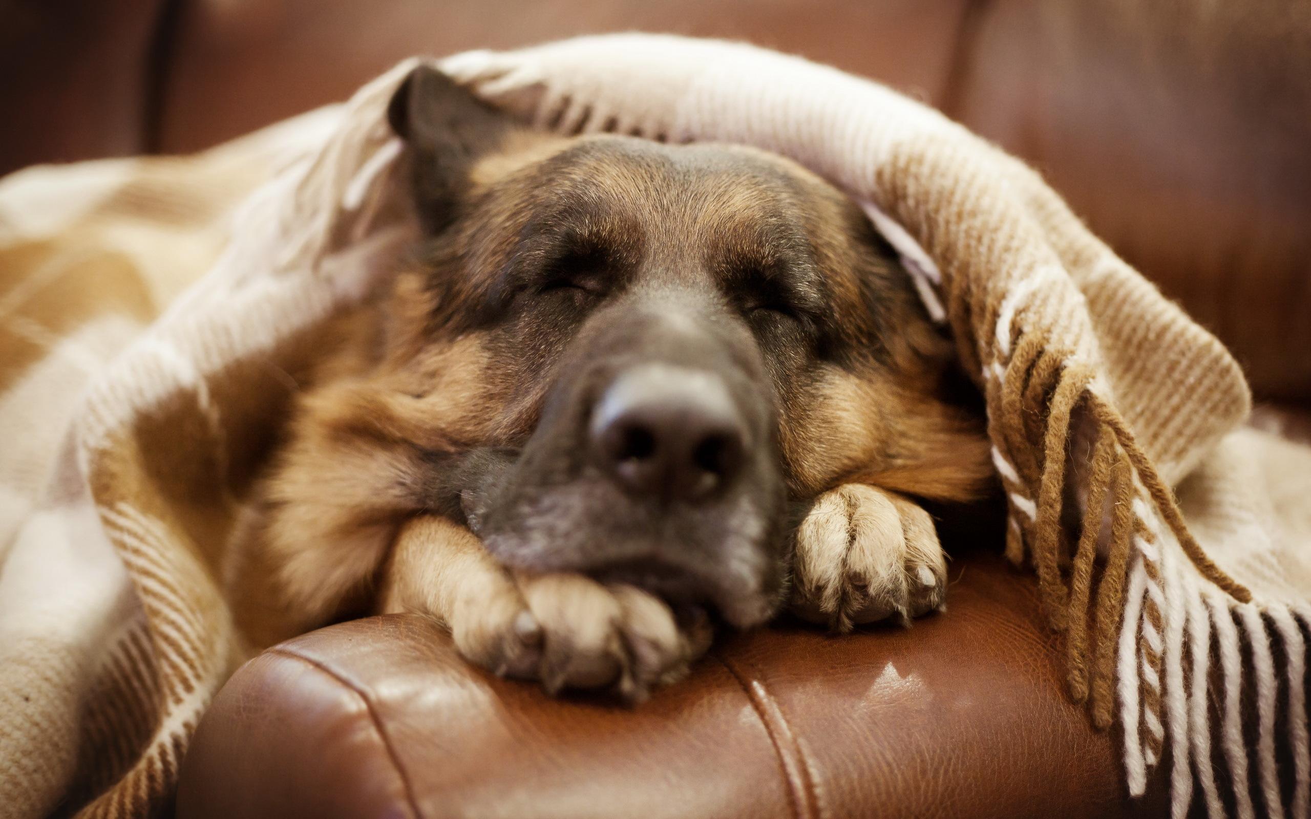 собака кровать  № 2010297  скачать