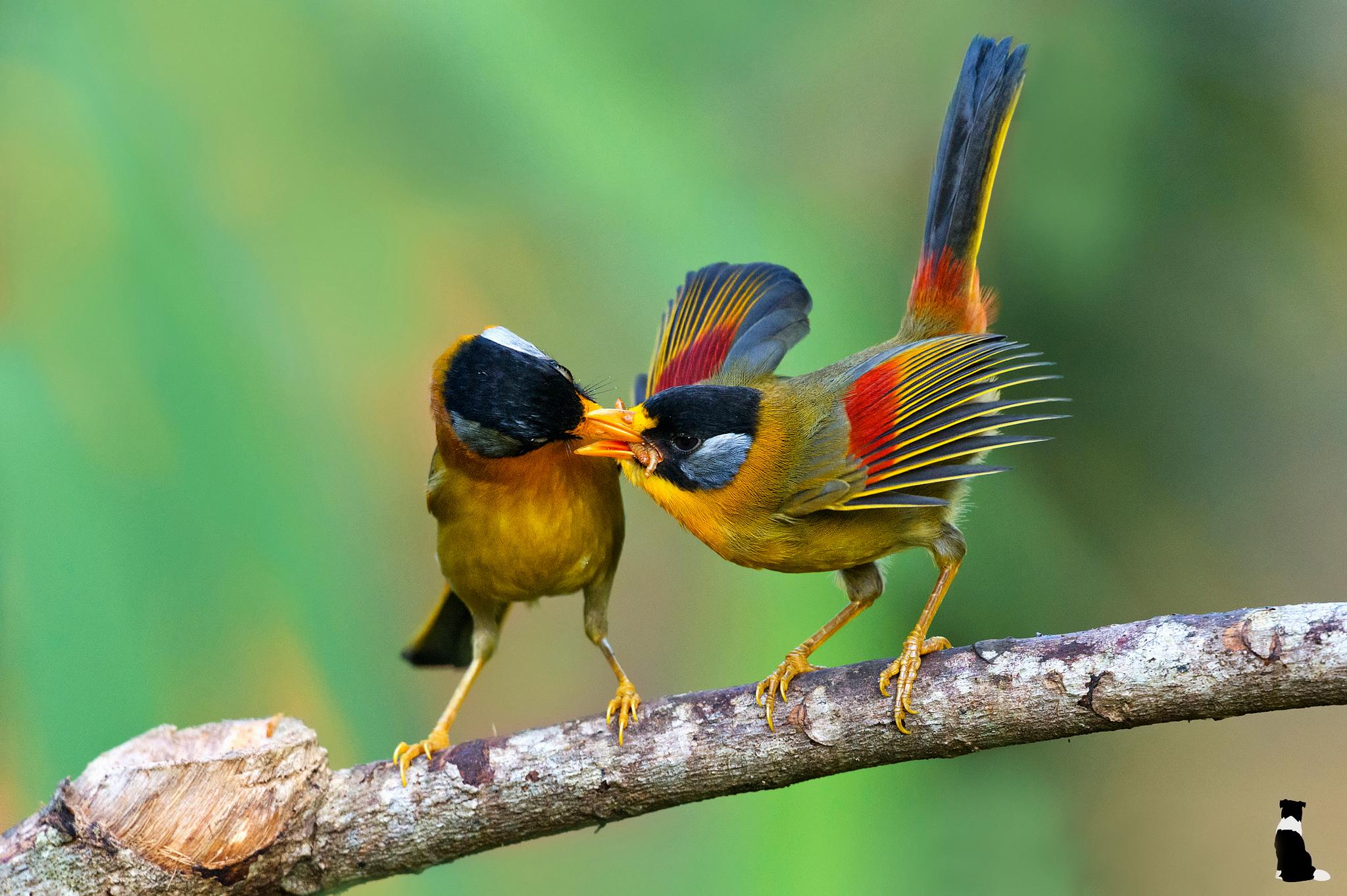 Две птички на стебле кукурузы  № 1532781 загрузить