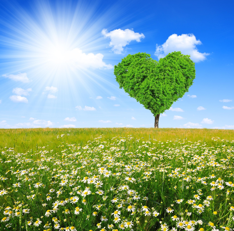 Сердце из зелени  № 1599091 загрузить