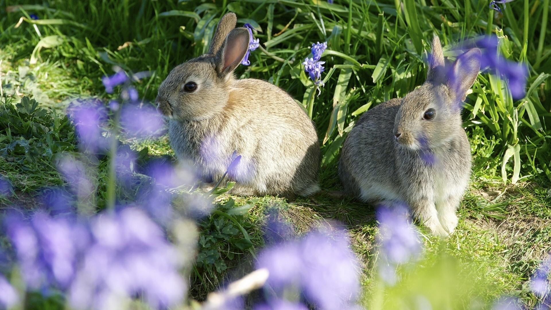 кролик девушка природа животное  № 1594091 бесплатно