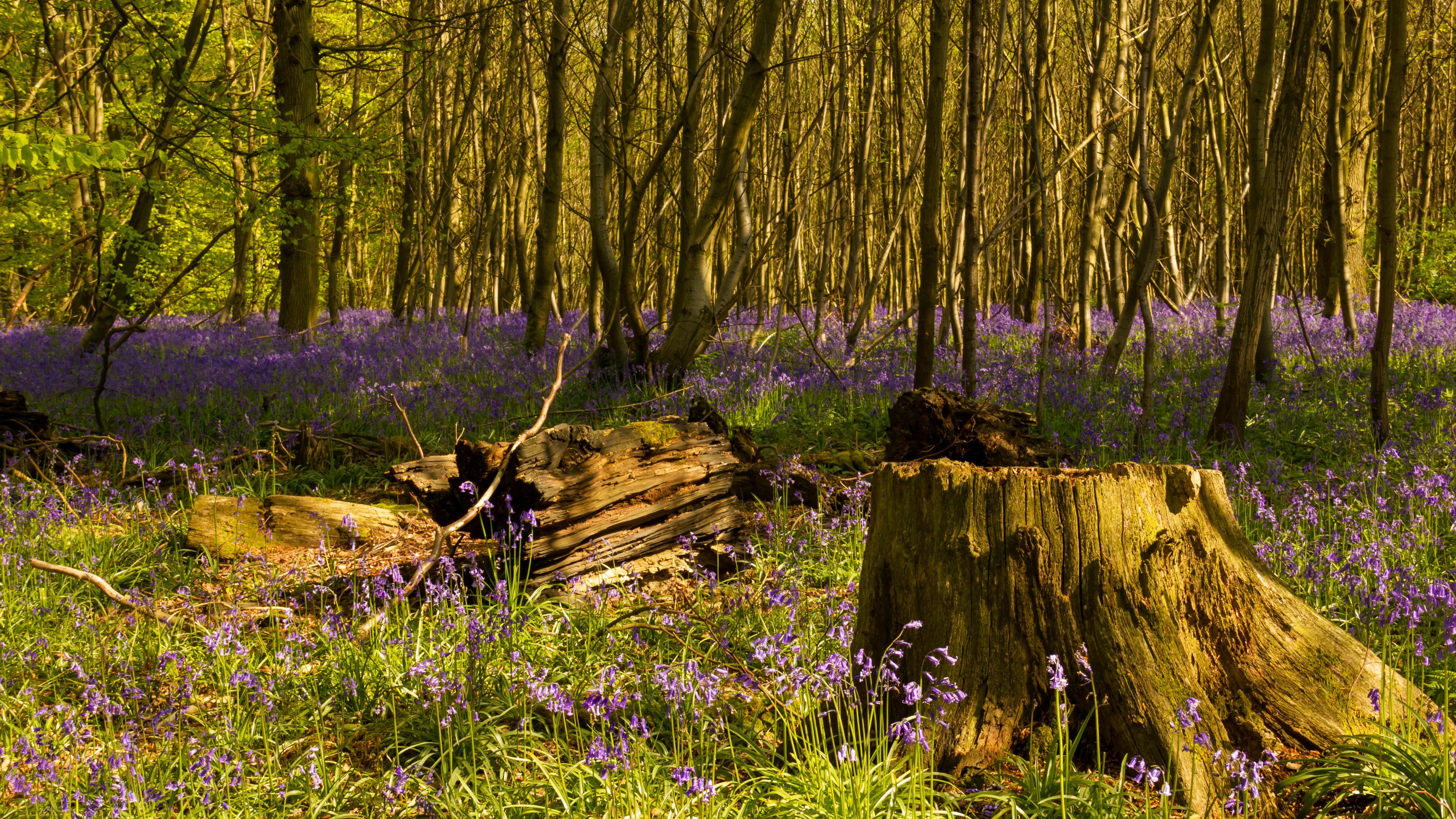 весной в лесу  № 113937  скачать