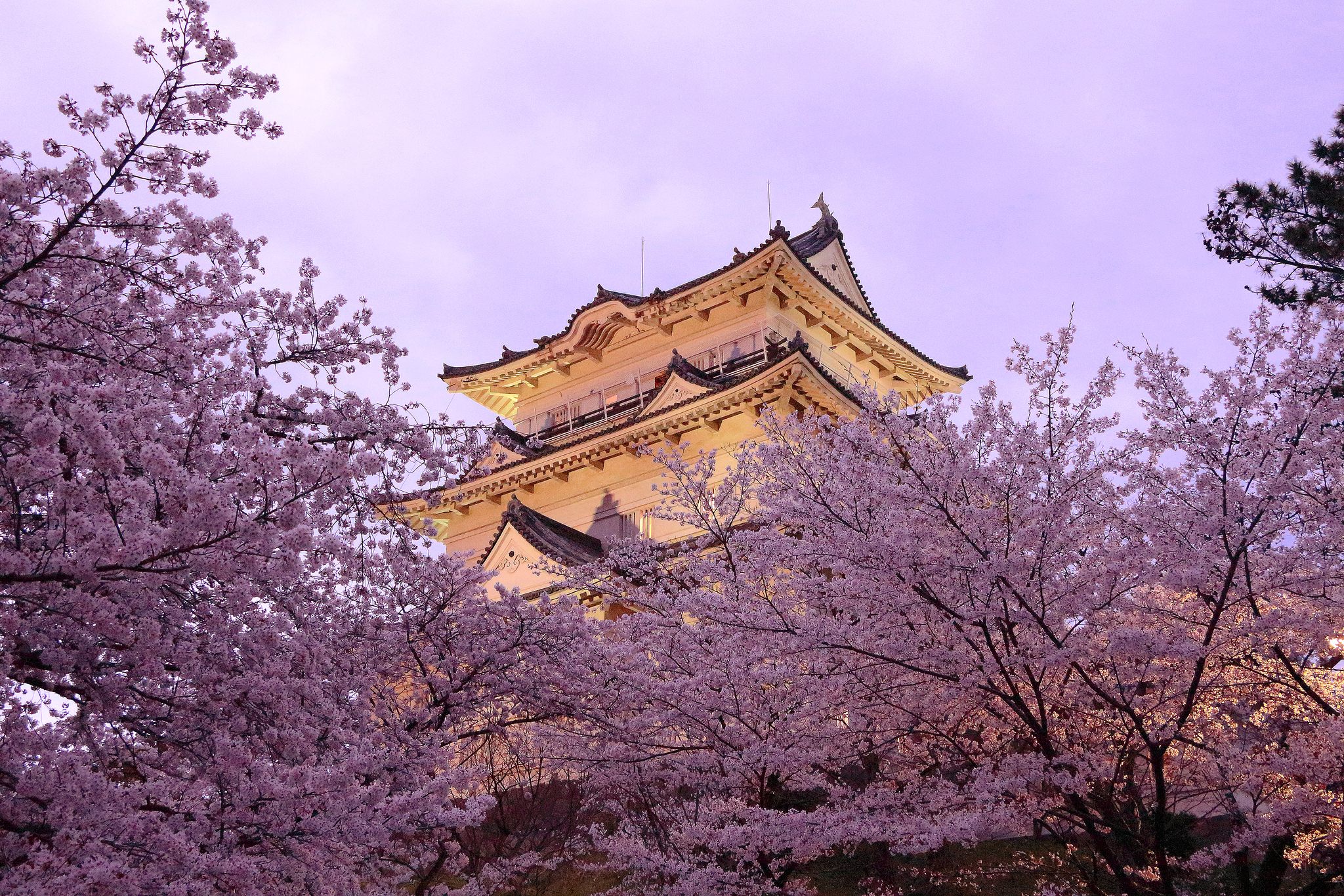Замок Осака Япония сакура  № 3700714 без смс