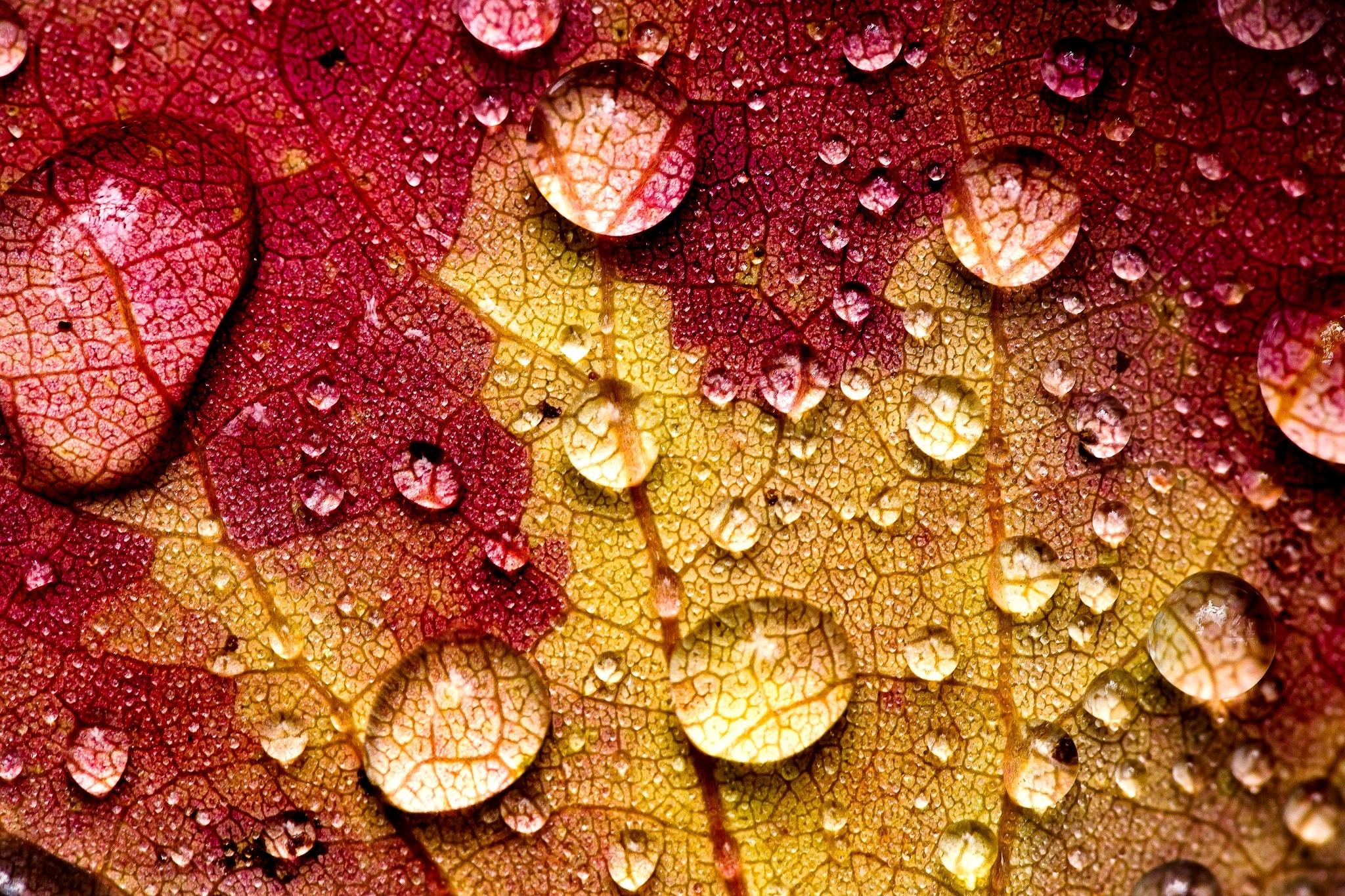 листок капля желтый на воде  № 2777366  скачать