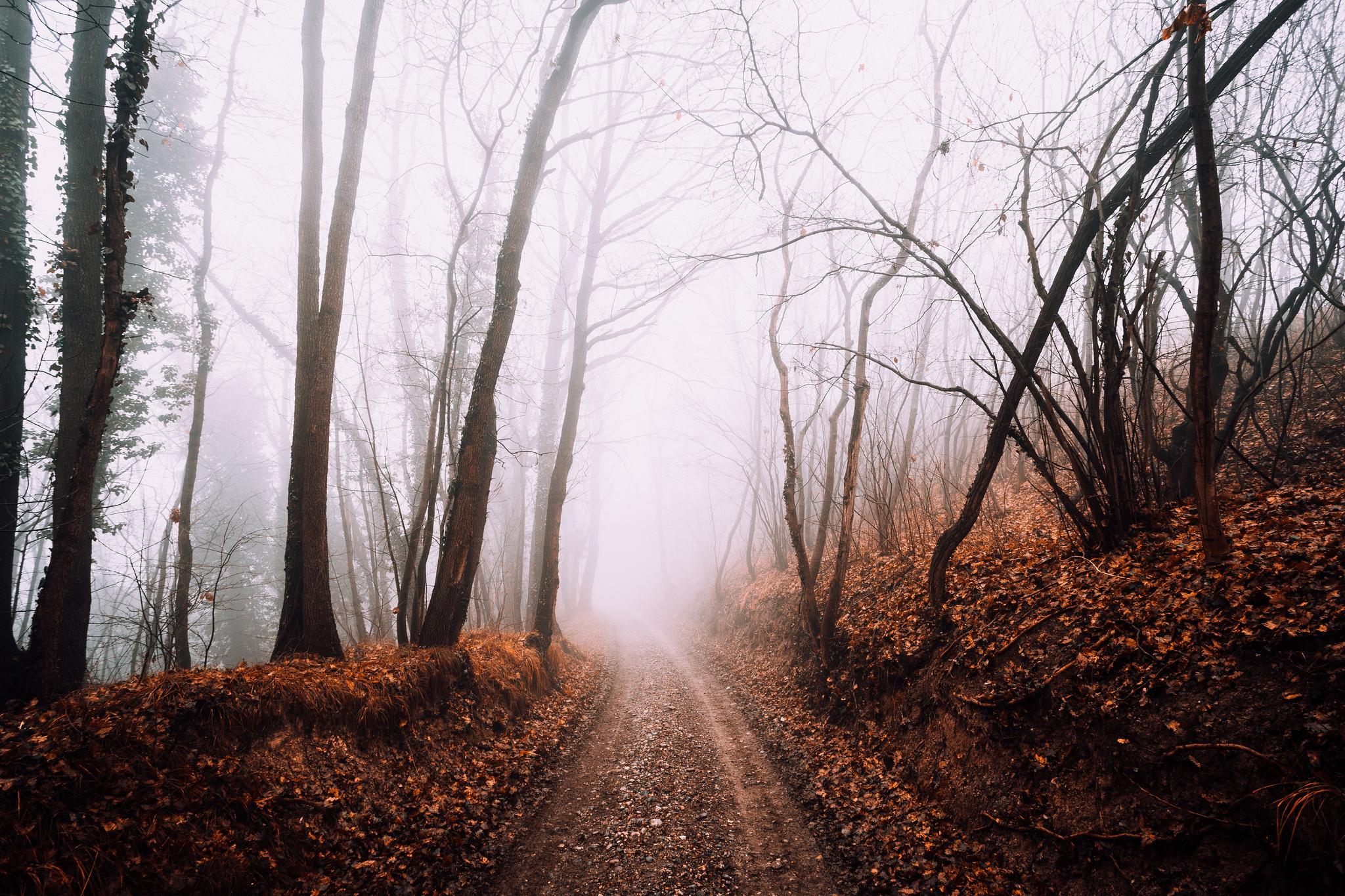 Заброшенная дорога в лесу  № 1103900 бесплатно