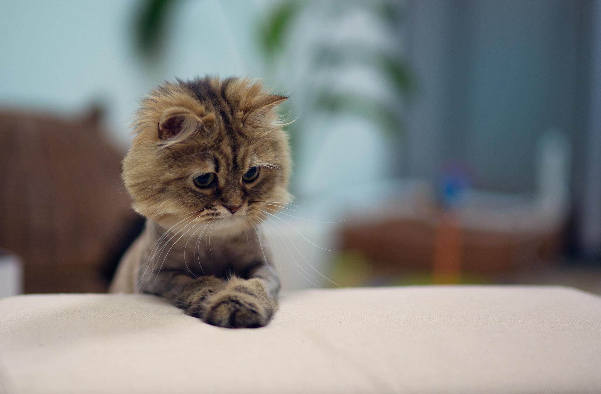 обои котята для рабочего стола: