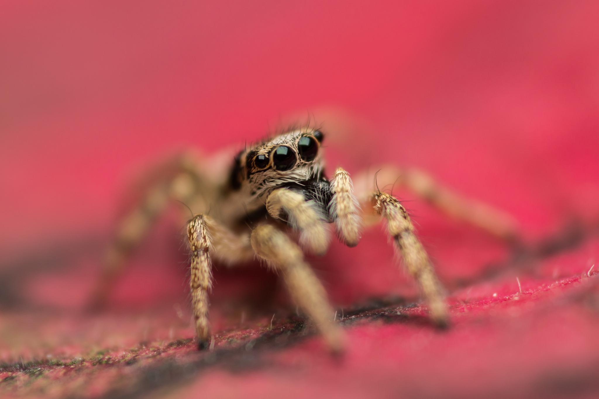 природа животные паук  № 2544198 загрузить