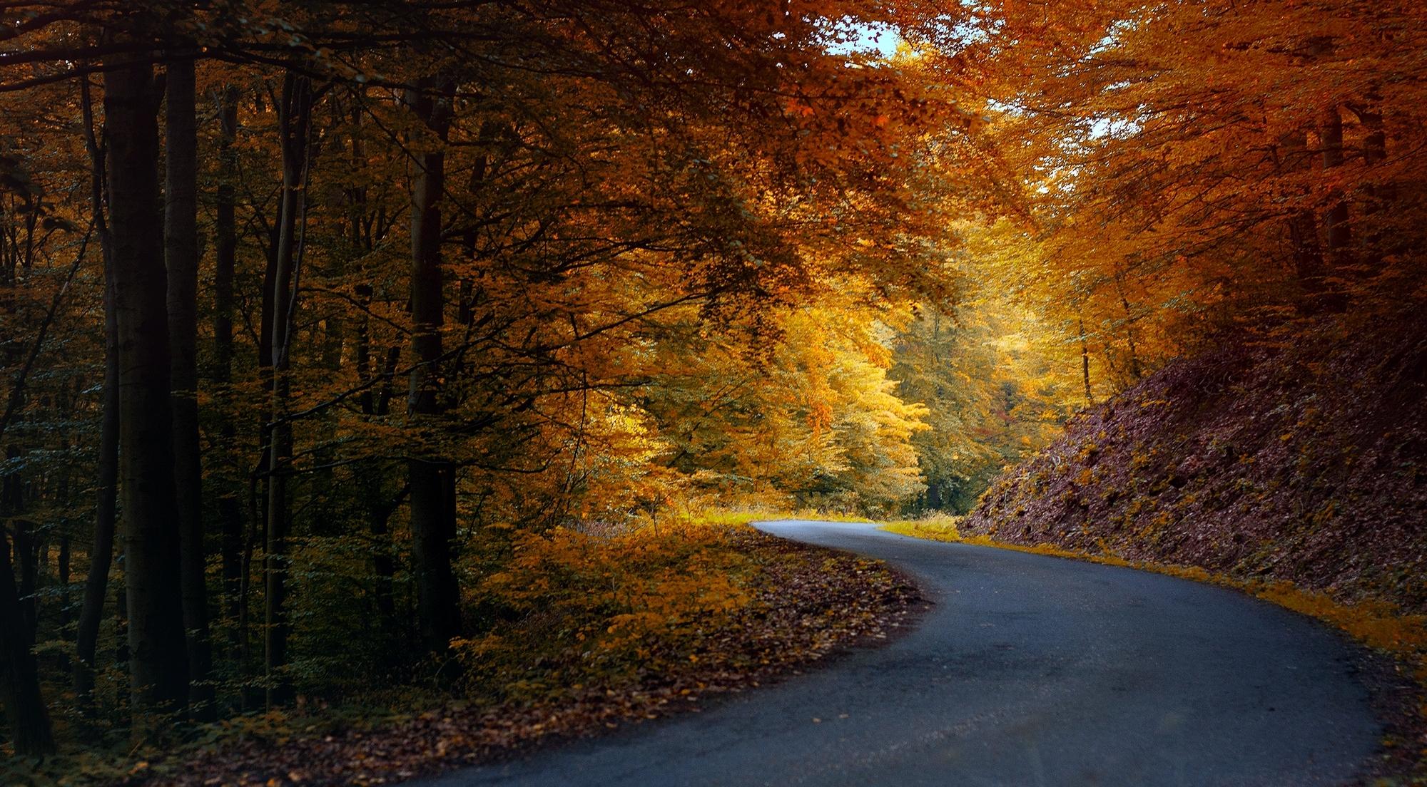 автомобиль осень лес дорога  № 3771456  скачать