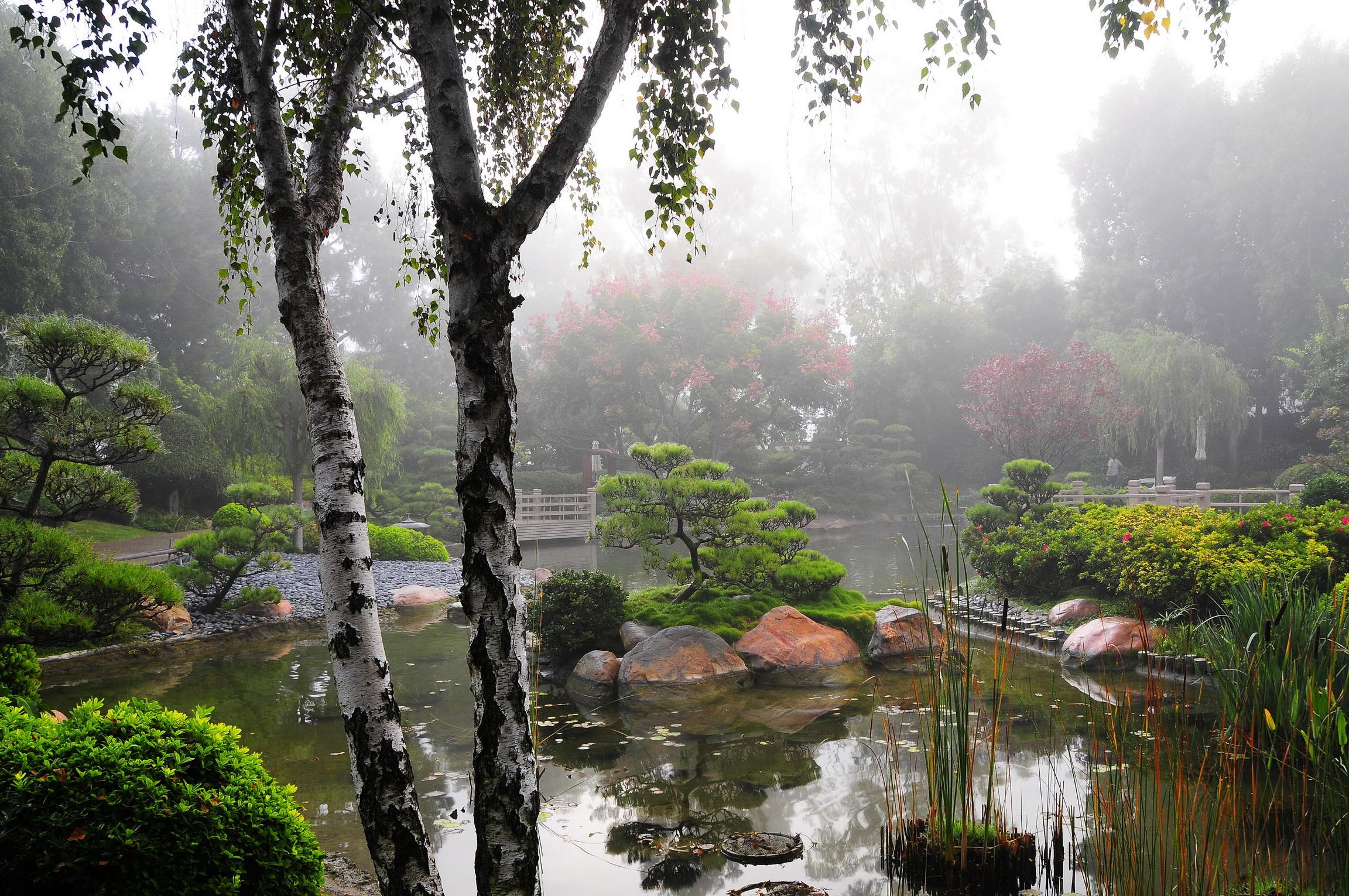 природа береза деревья вода озеро лес  № 2791927 загрузить