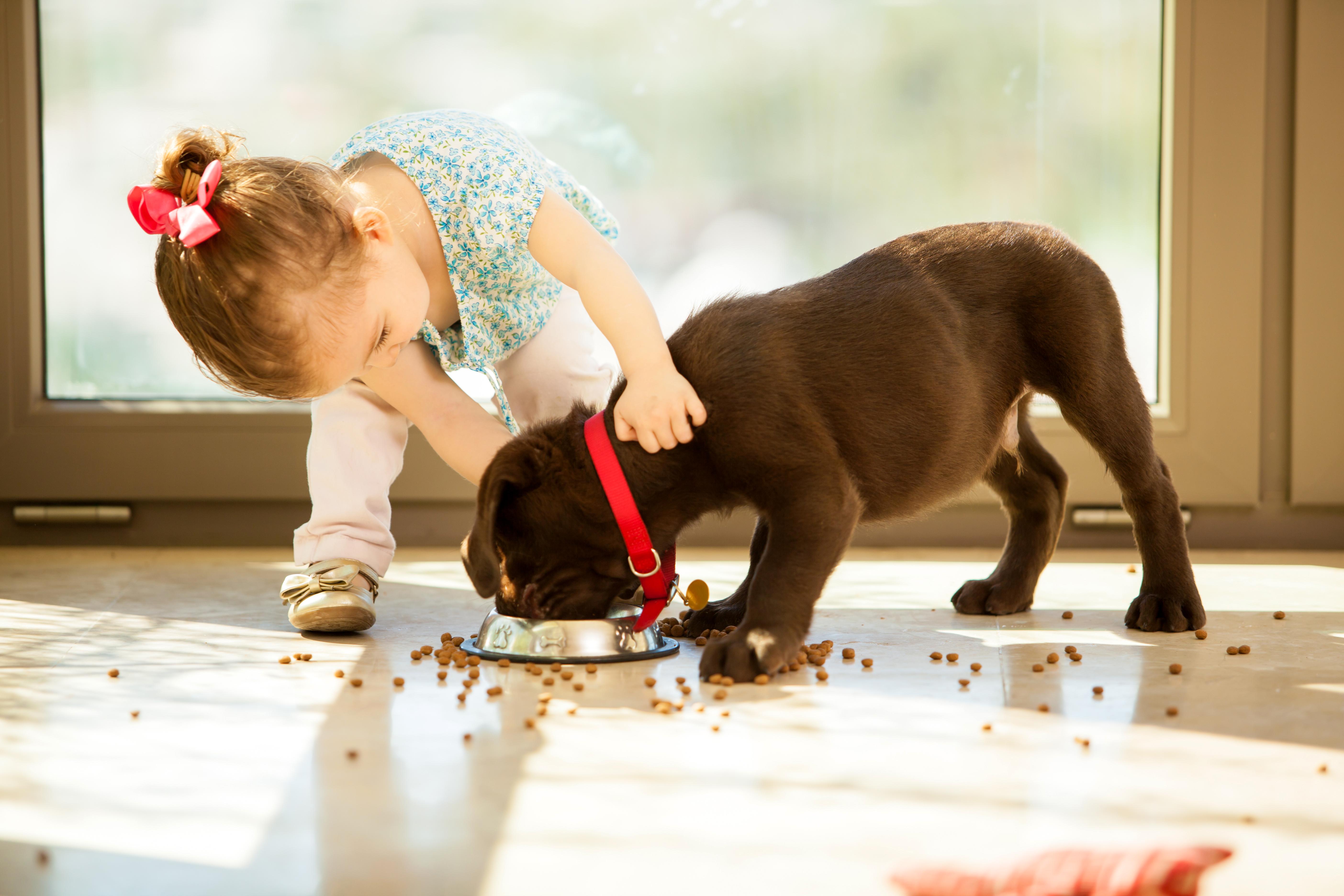 Собака ребенок  № 2980047 бесплатно