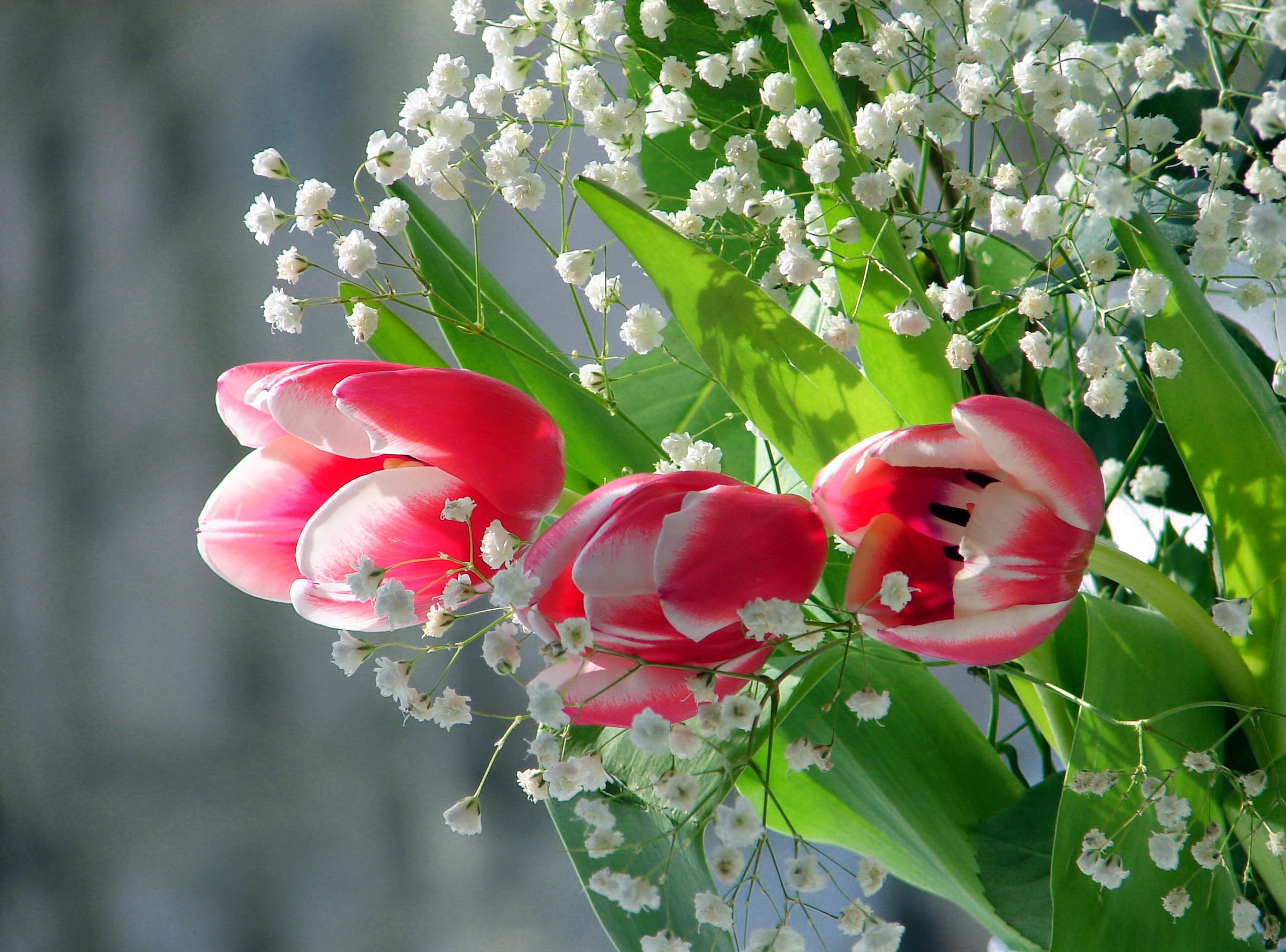 Цветы белые ландыши  № 1608779 загрузить