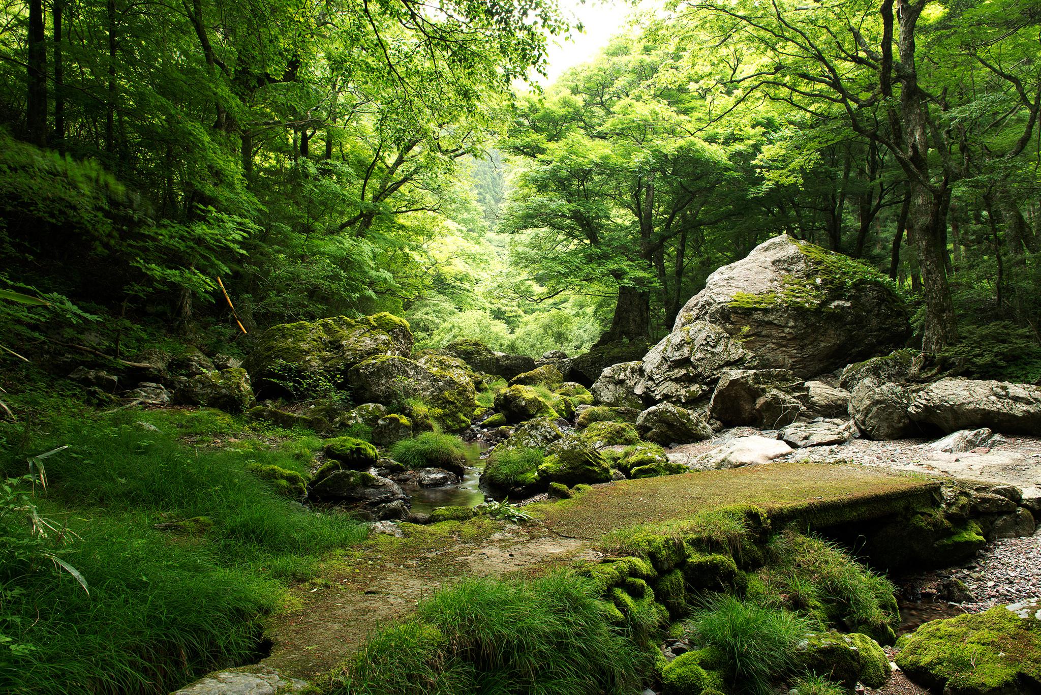 природа вода река трава деревья мох  № 3800951 без смс