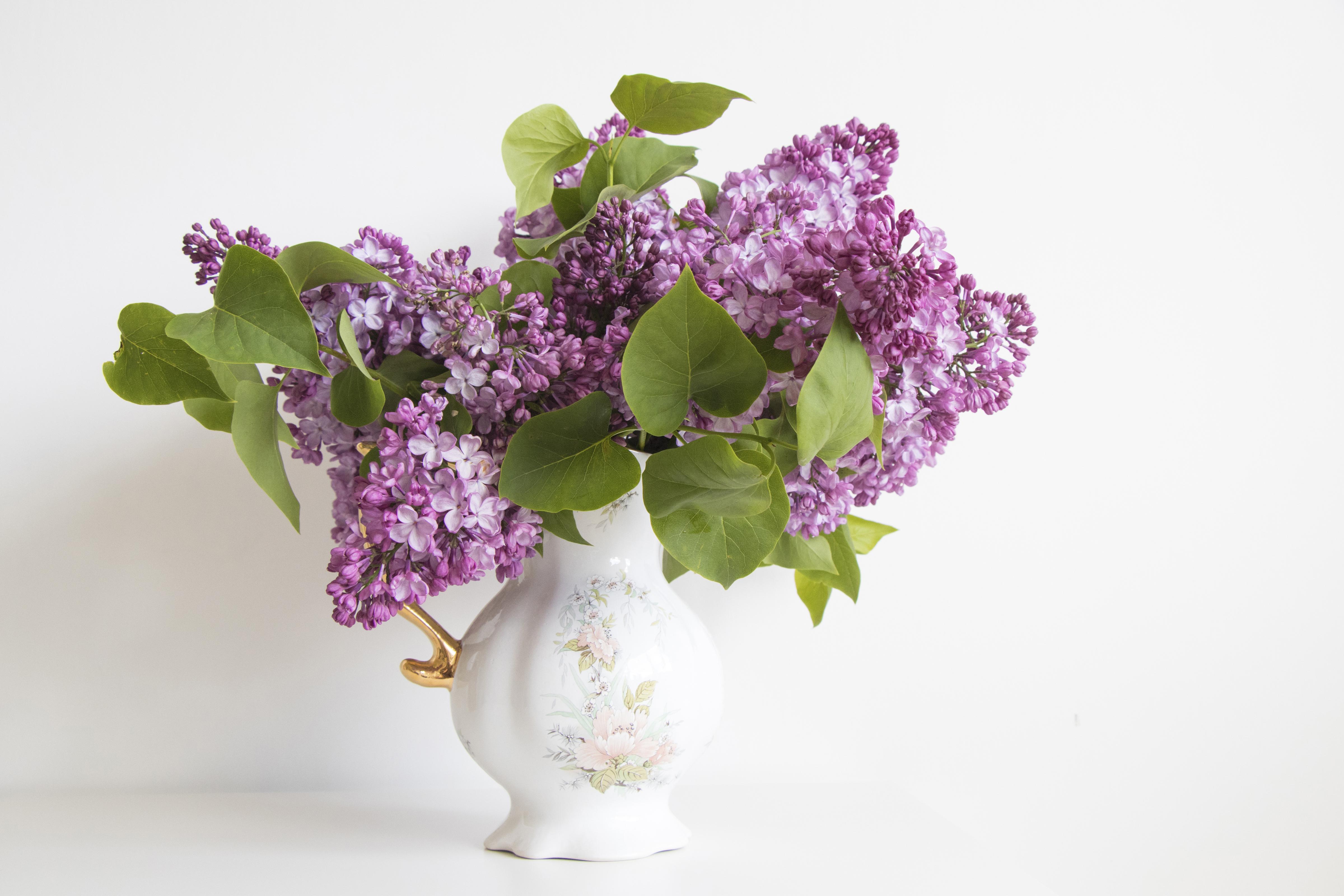 природа цветы ваза сирень  № 3063899 бесплатно